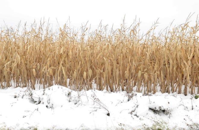 Early November snows have complicated an already tough 2019 growing season.