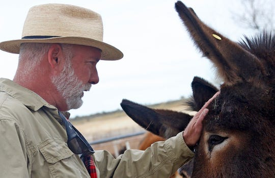 Mark Meyers pats a donkey on the head at the Peaceful Valley Donkey Rescue in San Angelo on Wednesday, Nov. 13, 2019.