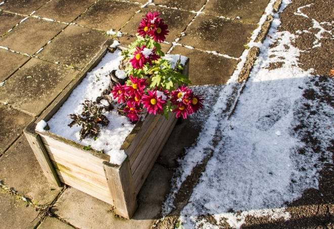 Drought-stressed plants are more susceptible to cold damage, so watering plants a few days in advance of a cold snap is beneficial.