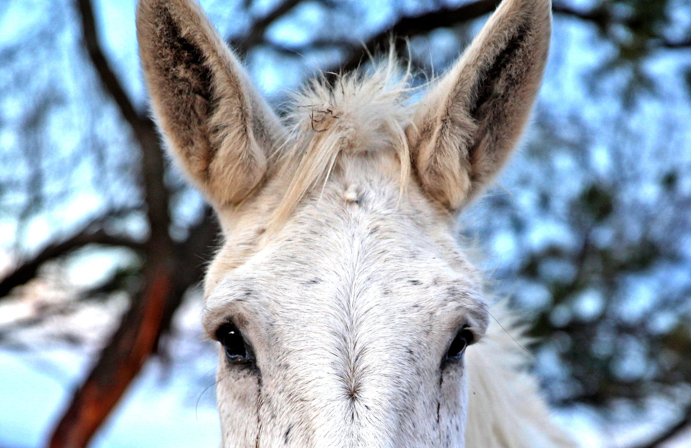 A donkey waits to be fed during the morning feeding time at the Peaceful Valley Donkey Rescue on Tuesday, Nov. 12, 2019.