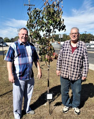 A flowering pear tree was planted and a plaque was placed at the Boys & Girls Clubs of Cumberland County's Crystal Avenue site in memory of B.J. Giercyk, who passed away earlier in 2019.Chris Volker, (left) executive director, Boys & Girls Clubs of Cumberland County, and Albert Giercyk, B.J.'s husband, stand beside her tree.