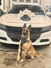Tora, a K-9 with the Indiana State Police, stands near 21 pounds of meth found in a vehicle pulled over on Ind. 3 in Henry County.