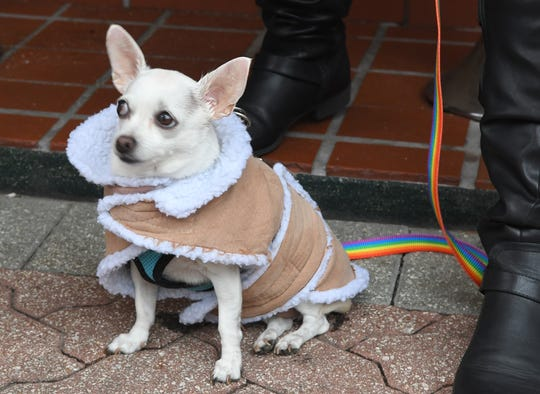 Lucy the Chihuahua was bundled up while out with Darby Moxham and her dad Daniel in the Cocoa Village during the chilly weather of Sunday, November 17.