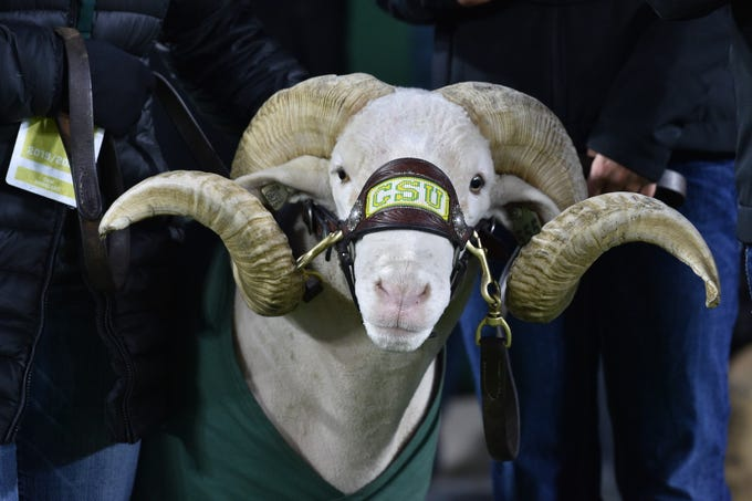 Cam, the Colorado State Rams mascot, at Sonny Lubick Field at Canvas Stadium.