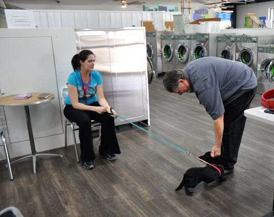 Wash This Way co-owner Mike Reppart pets Dessa while her owner Samantha Griffin waits in the self-serve area of the laundry center at 710 Butternut St. on Monday, Nov. 18, 2019. Dogs at the center must be leased.