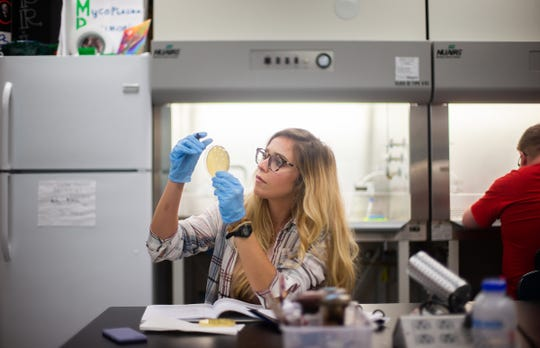 Gabrielle Rueff inspects her Petri dish during a recent phage hunter class at Austin Peay.
