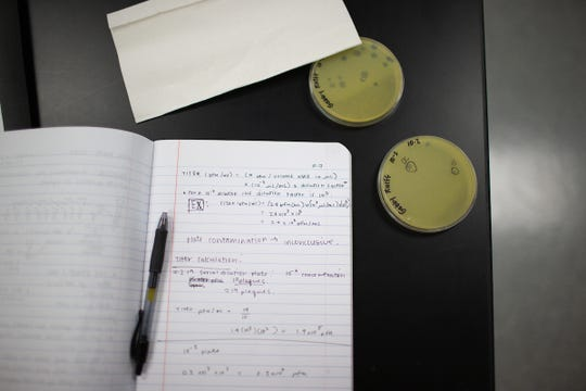 """Gabrielle Rueff's notes show how she's working out how many phages she has """"grown."""""""