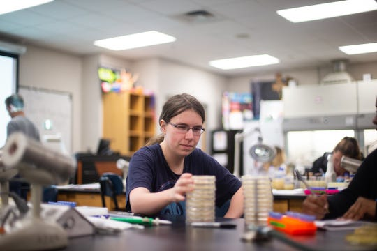 Sarah Binkley arranges her stacks of Petri dishes that contain the phage and the bacteria the phage is attacking.