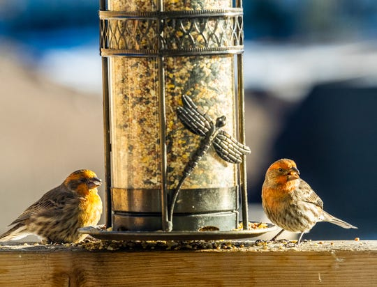 A small bird feeder full of seeds and nuts can draw the prettiest birds right to your front windows.
