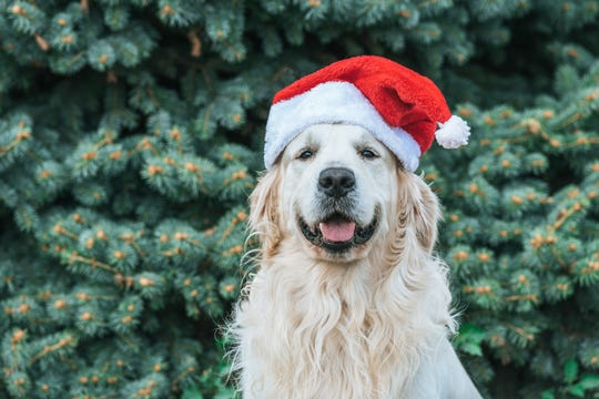 Lollypop Farm and Pet Supplies Plus are offering holiday pet photo sessions.
