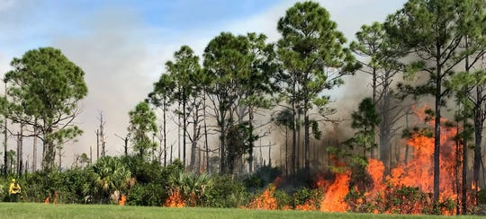 About 300 acres of a 400 acre controlled burn at Savannas Preserve State Park was burned Monday, Nov. 18, 2019.