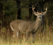 Ann Arbor's city council approved a plan to kill deer that are living in parks and natural areas and on some private land