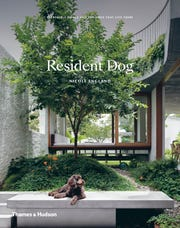 """Resident Dog"" by Nicole England"