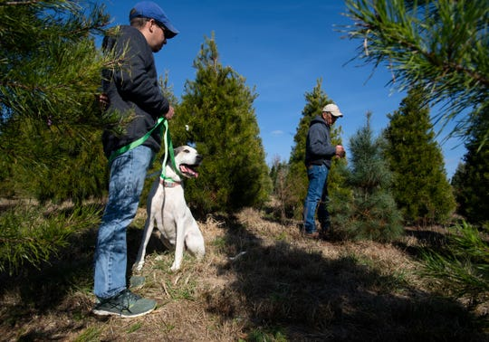 Bart Gilmer, left, his father Ray Gilmer and their dog Pearl walk between Christmas trees they grow at Falcon Ridge Farm in Toone, Tenn. on Nov. 18, 2019.