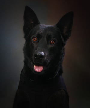 Barry, West Lafayette police K9, was euthanized Monday because of a medical condition.