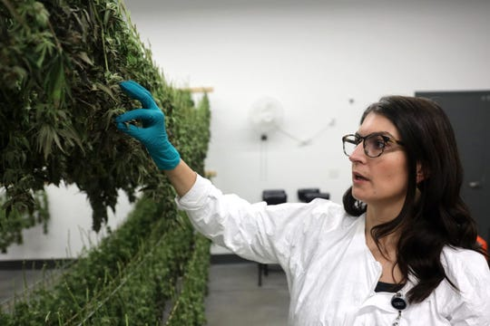 LeafLine Labs director of operations Megan Gaulke is seen at the company's headquarters in Cottage Grove, Minn., April 18, 2019. Gaulke explains how the cannabis plants are dried in this room, so they can be shucked, then used to make cannabis oil, which is the base of most of its LeafLine Labs' medicinal products. A total of 33 states plus the District of Columbia have legal medical marijuana, although Wisconsin currently does not.