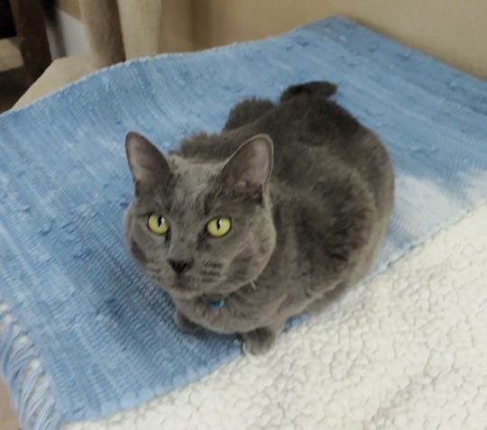 Allie is available for adoption at 10807 N. 96th Avenue, Peoria. For more information, call 623-773-2246  after 10 a.m.