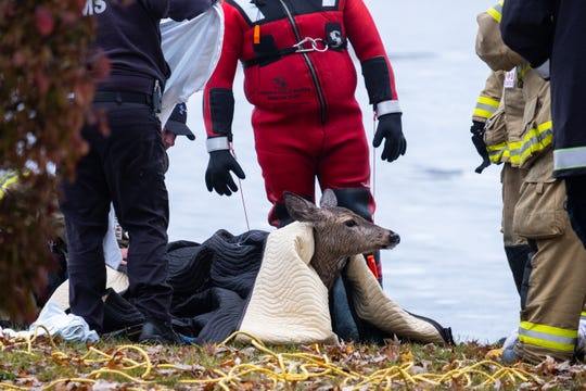 First responders drape blankets over a deer that was rescued from a Kimball Township lake Tuesday, Nov. 19, 2019. Kimball Fire Chief Ed Gratz said there was a report of a deer on the ice about 7 a.m. at 6229 Twin Lakes Drive.