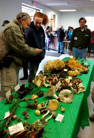 Guides and experts from the Willamette Valley Mushroom Society helped introduce more than 620 visitors to fungal fascinations at the group's fourth annual show on Nov. 17 in Salem.