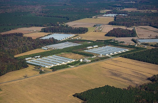 Chicken farms near Princess Anne in Somerset County.