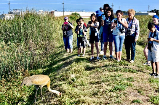 Members of the Audubon Advocates after-school group take photos of a sandhill crane at the wetland adjacent to the West Regional Wastewater Treatment Plant near Vero Beach.