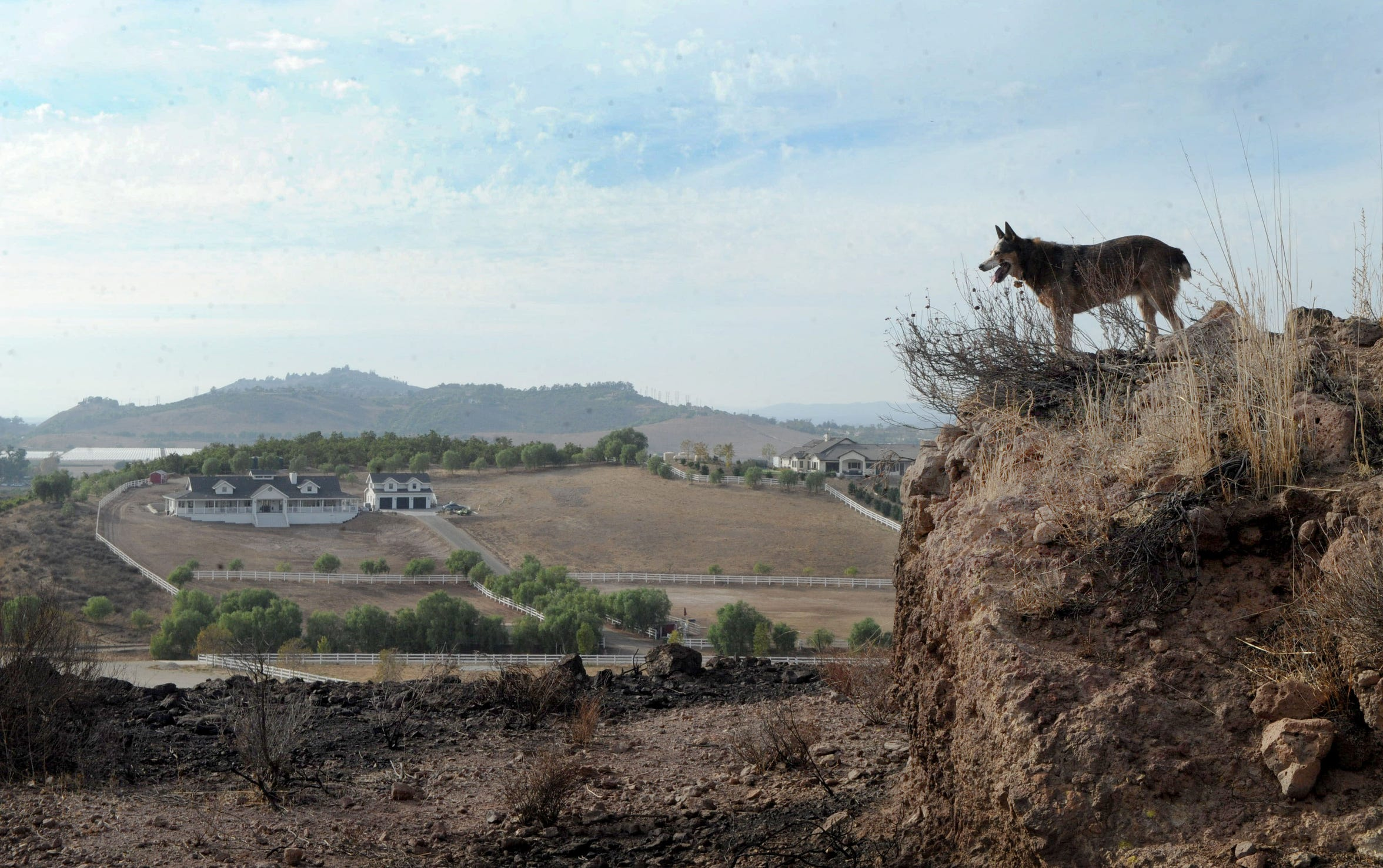 Melinda and Chuck Carmichael's dog Lucy stands on top of a hill overlooking the Tierra Rejada Valley. The Easy Fire charged through the Carmichaels' property Oct. 30, 2019. If it weren't for brush clearance, they believe their home may have been lost.