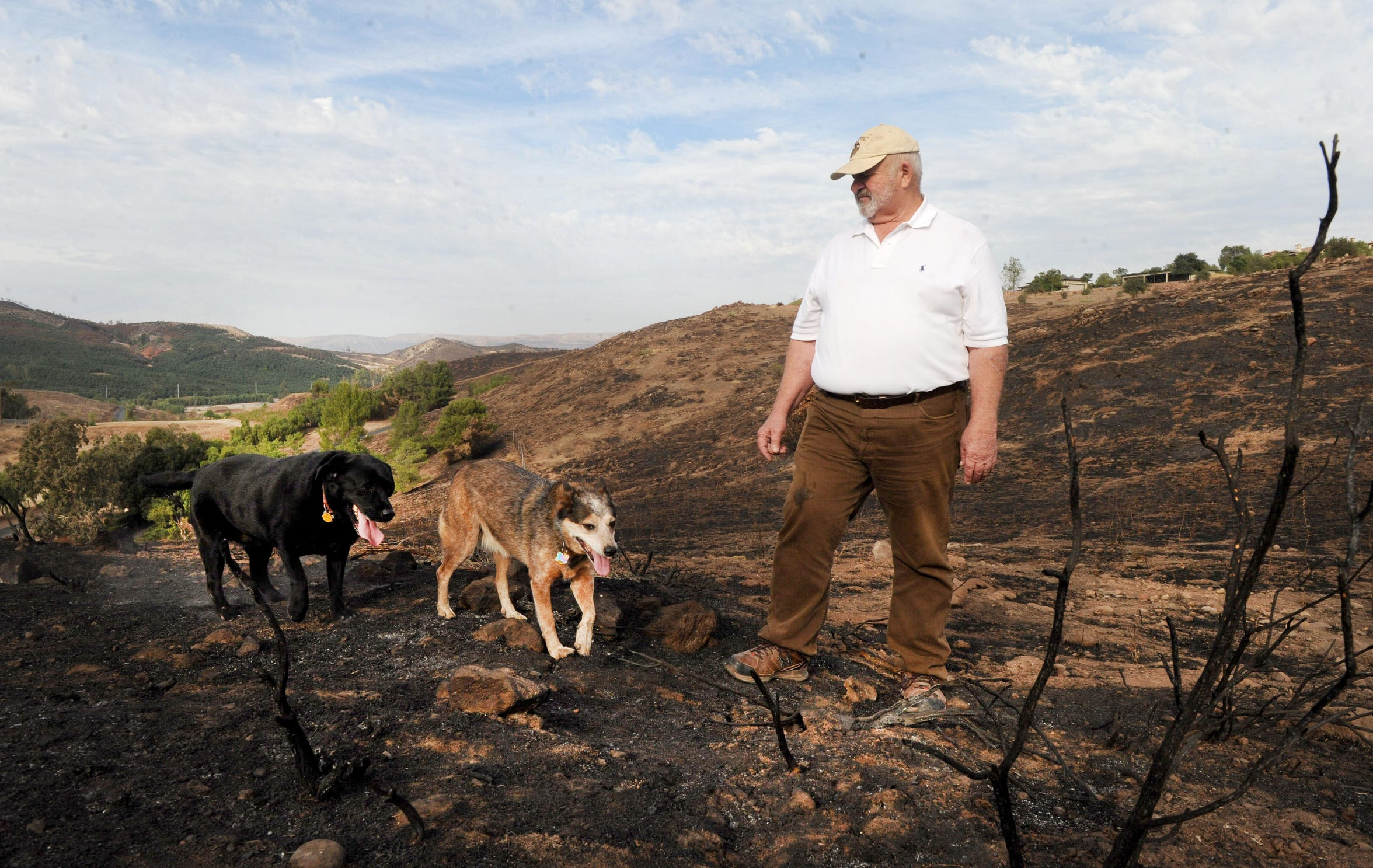 Chuck Carmichael walks through the burned brush on his neighbor's property with his dogs, Valentine and Lucy. His Tierra Rejada Valley home, near Simi Valley, is behind him. The Easy Fire charged through the area Oct. 30, 2019.