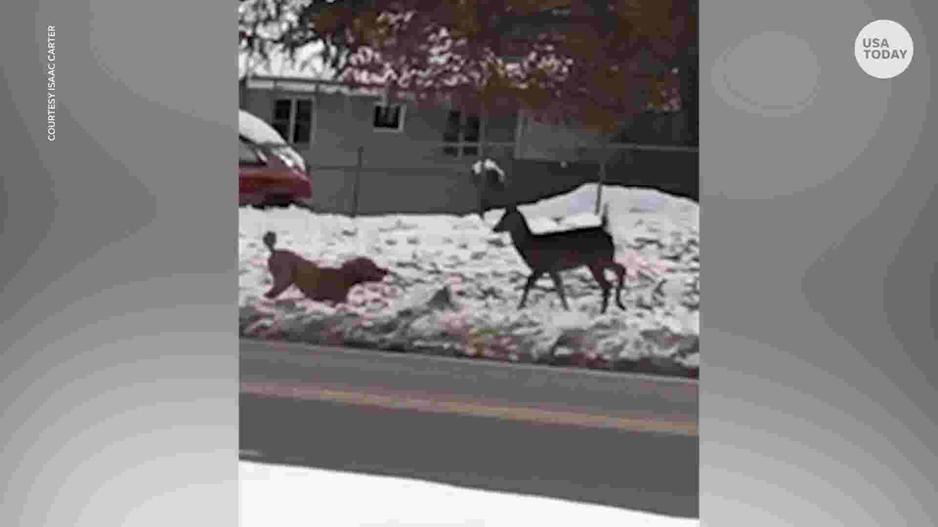 Camera captures unlikely friendship between dog and deer