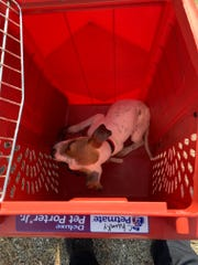 Mount Healthy Police find puppy in a garbage bag Tuesday morning.