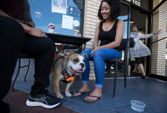 Boulder, an English bulldog, with his owners Bionca Martinez and Angel Ramirez outside a Starbucks in downtown Fort Myers.