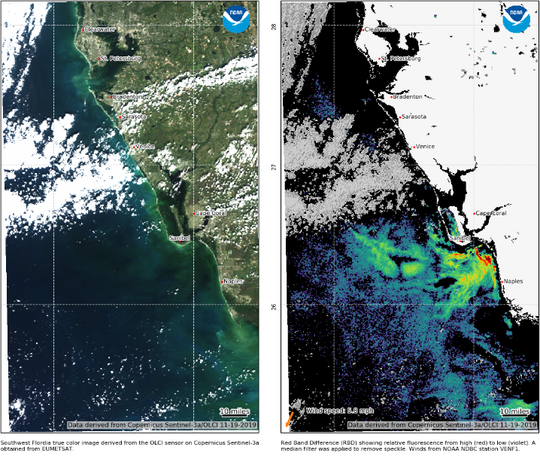 Red tide (Karenia brevis) cells are seen offshore Nov. 11, 2019, from the Copernicus Sentinel-3 satellite data from the European Organisation for the Exploitation of Meteorological Satellites (EUMETSAT) and were processed the National Oceanic and Atmospheric Administration