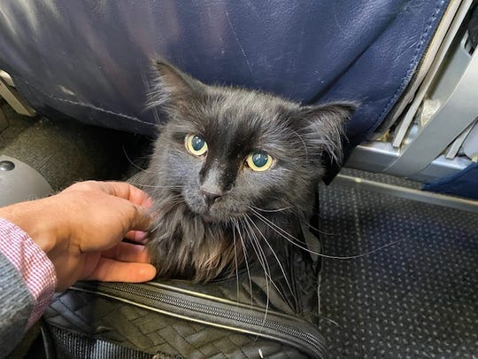Sasha flew home to Portland after five years away from his family. He was found by the Santa Fe Animal Shelter roaming the streets of New Mexico.