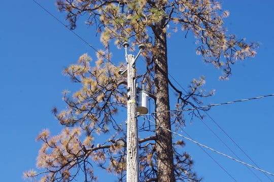 Lakehead residents said they were concerned about this tree damaging nearby Pacific Gas and Electric Co. power lines.
