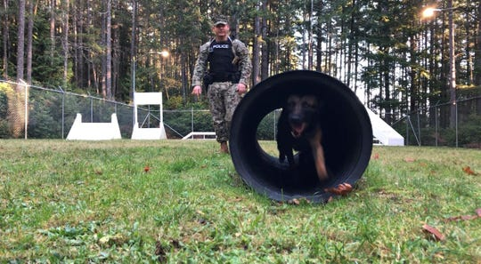 BBrazas, an explosives-hunting dog, shows off Wednesday on Naval Base Kitsap-Bangor's obstacle course for K-9s.