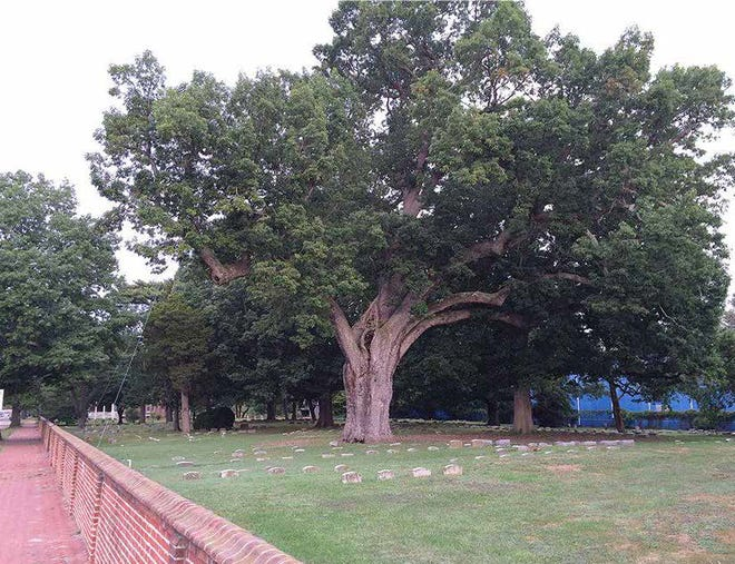 The Salem Oak, which was an estimated 600 years old, stands on the burial grounds of the Salem Friends Meeting before it was toppled in  June 2019 by a severe storm .