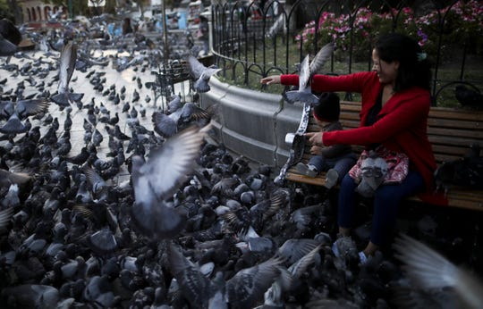 A woman feed the pigeons at Murillo square in La Paz, Bolivia, Wednesday, Nov. 20, 2019. Bolivia has been in a state of turbulence since a disputed Oct. 20 vote that, according to an international audit, was marred by irregularities.