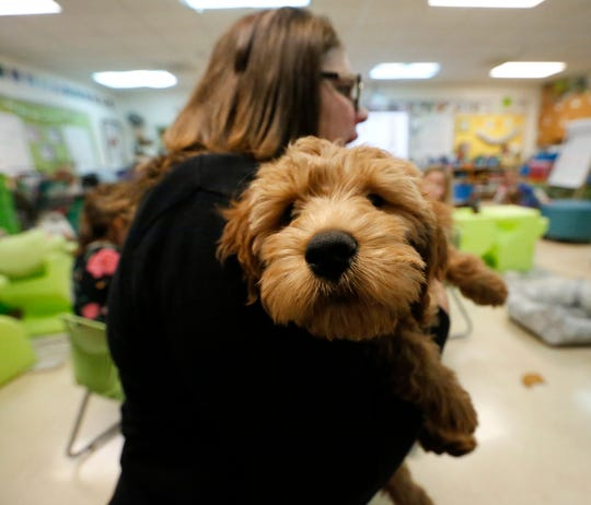 Shelby, a therapy dog in training is held by her handler teacher Carrie Naparalla on Nov. 21, 2019, at Journey Charter School in Ripon, Wis. Shelby spends the day in the classroom to help calm some students and staff that may be feeling anxious.