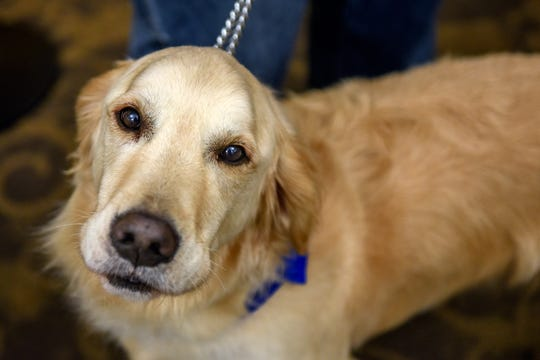 Scott Grammer's golden retriever Fletcher photographed at the Regency Lansing West senior living facility on Wednesday, Nov. 20, 2019, in Delta Charter Township. Grammer and other volunteers from the local chapter of Love on a Leash meet with residents once a week.