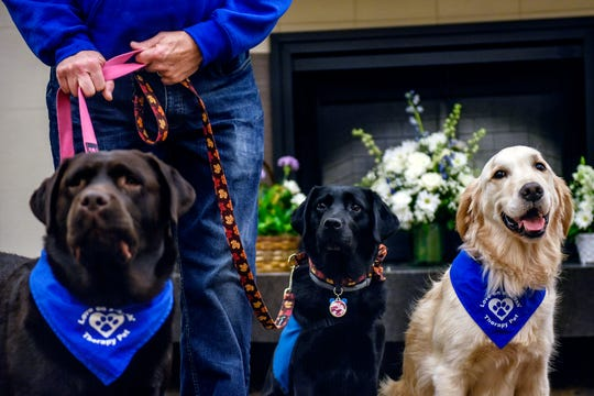 From left, therapy dogs Nevaeh, Tasha and Fletcher wait in the lobby before visiting with residents at the Regency Lansing West senior living facility on Wednesday, Nov. 20, 2019, in Delta Charter Township. Volunteers from the local chapter of Love on a Leash meet with residents once a week.