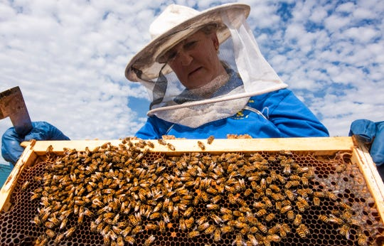 Stacy VanDortrecht, of S&B Apiaries, tends to some of her bee hives in Millbrook, Ala., on Thursday November 21, 2019.