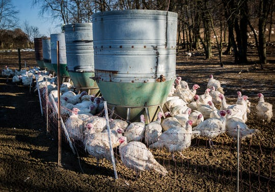 Modified pig feeders provide turkeys with non-GMO feed at Becker Farms back in November.