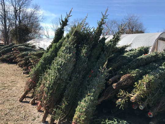 The Christmas trees at the Burns Garden Center, which suffered a devastating fire on the property.
