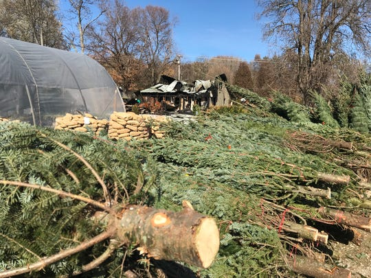 The house, in the photo background, at the Burns Garden Center that served as the place of business and residence for the owner's family was burned Sunday morning. The Christmas trees in the foreground are being sold by the owners.