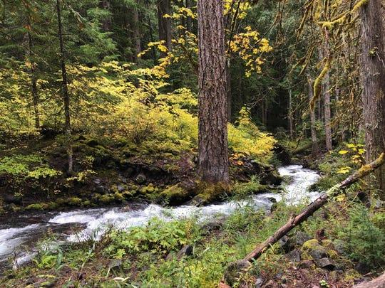 Pamelia Creek runs along the west side of Mt. Jefferson.