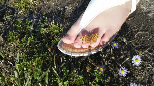 A butterfly perched on Sam Venable's foot Thanksgiving Day 2018.