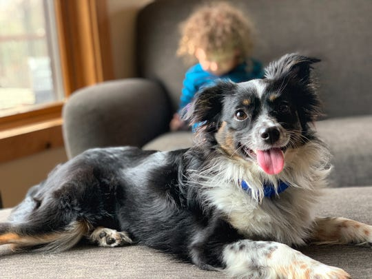 The Wisconsin Humane Society is looking for people to foster dogs for one or two days over the Thanksgiving holiday.