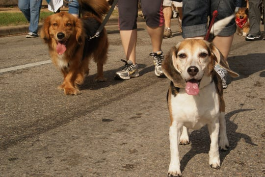 Your dogs could be having this much fun if you treat them to the Paws & Hearts dog walk and fundraiser.