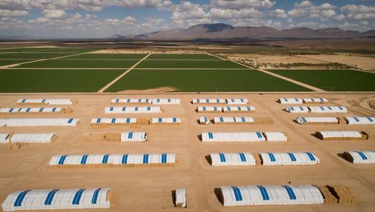 Aldahra Farms USA, McMullen Valley Ranch, Sept. 9, 2019, Wenden, Arizona.