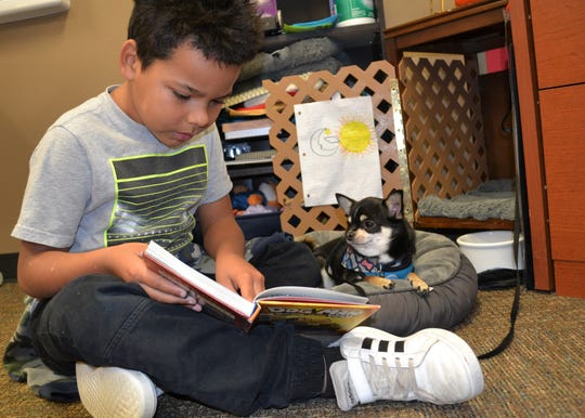 Second-grader Jerryn Davis, 8, reads to Harley the chihuahua Thursday, Nov. 14, 2019, in the front office of Hawthorne Elementary.
