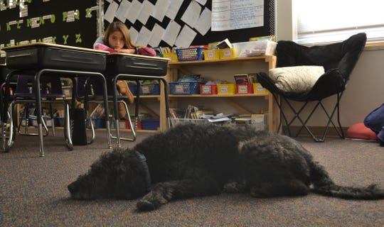 Clancy rests at the front of a fourth grade classroom Friday, Nov. 22, 2019, at R.F. Pettigrew Elementary as student Paige Schmidt looks on and listens to her instructor's lessons.